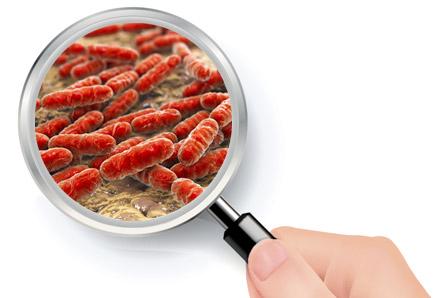 zoom probiotiques